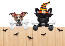Halloween  devil dogs hungry for food Royalty Free Stock Images