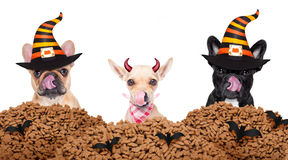 Halloween  devil dogs hungry for food Stock Image