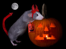 Halloween devil rat Royalty Free Stock Photos