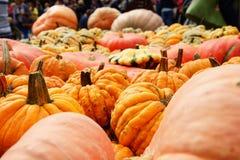 Halloween ` die s komen: klaar pompoenen royalty-vrije stock foto's