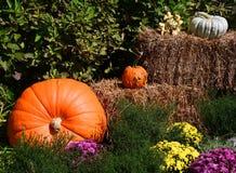 Halloween Display Royalty Free Stock Image