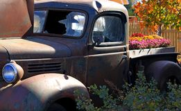 Halloween display. Old truck being utilized with flowers in the bed for Halloween Royalty Free Stock Images