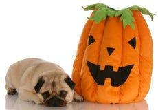 Halloween dog Royalty Free Stock Image
