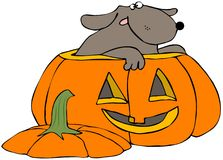 Halloween Dog Stock Photos