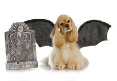 Halloween dog Royalty Free Stock Photo
