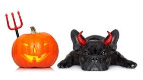 Free Halloween Dog Banner Royalty Free Stock Photo - 77734865