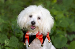 Free Halloween Dog Costume Stock Image - 60779271