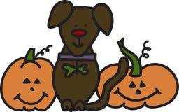 Halloween Dog Stock Images