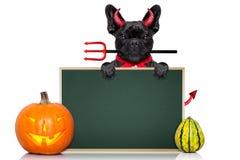 Halloween dog Stock Photo