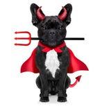 Halloween dog Royalty Free Stock Photography