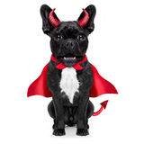 Halloween dog. Halloween  witch french bulldog  dog  dressed as a bad devil with red cape , isolated on white background Stock Image