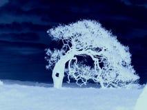 halloween drzewo Zdjęcia Royalty Free