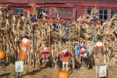 halloween dsplay stock image - Halloween Corn Stalks