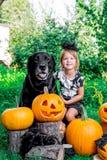 halloween Dziecko ubierał w czarnym pobliskim labradorze między lampion dekoracją, trikowym lub fundą, Mała dziewczynka z psią ba Obraz Royalty Free
