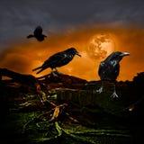 Halloween-Entwurfs-Urlaubsparty-Hintergrund-Vollmond Raven Crow Stockfoto