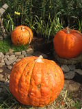 Halloween extérieur décorant des potirons Photos stock