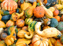 Halloween Fall Pumpkin and Squash Background. A Fall seasonal background for Halloween with small pumpkins, squash and gourds. Use it for texture or a produce Stock Photography