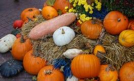 Halloween felice! Immagini Stock
