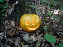 Halloween in forest Stock Photography