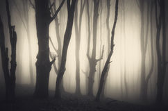 Halloween forest Stock Photos