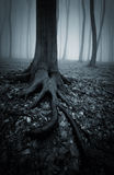 Halloween forest with roots of tree and fog Royalty Free Stock Photography