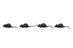 Halloween - Four Toy Mice in a Row - Isolated on White Royalty Free Stock Image