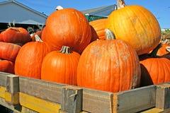 Halloween-Freude Stockbild