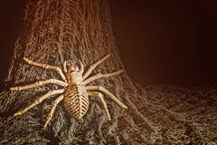 Free Halloween Fun, Spider Skeleton Climbing Up A Net Royalty Free Stock Photography - 193960527