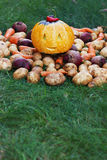 Halloween funny pumpkin with autumn harvest potatoes, carrots, beets on a green grass Stock Photography