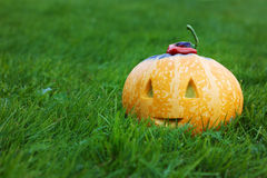 Halloween funny pumpkin with a smile in autumn green grass Stock Photo