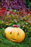 Halloween funny pumpkin with a smile in autumn leaves Stock Image