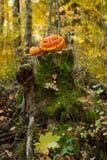 Halloween-furchtsamer Kürbis im Herbstwald Stockfotografie
