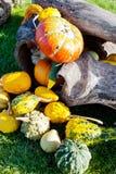 Halloween in the garden, Czech republic Stock Image