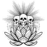 De Illustratie Van De Bloemzen Van Lotus Vector Zwarte Gravure