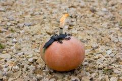Halloween Gele pompoen en zwarte spinnen met een knuppel royalty-vrije stock fotografie