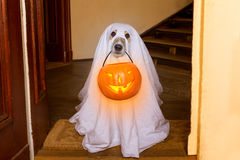 Halloween  ghost  dog trick or treat Stock Images