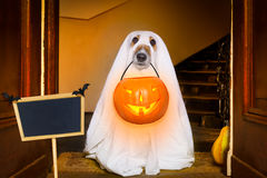Halloween  ghost  dog trick or treat Royalty Free Stock Images