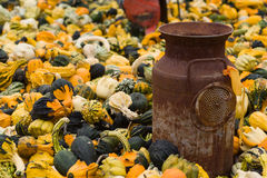 Halloween Gourds And Antique Milk Can Stock Image