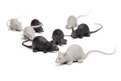 Halloween - Groep Toy Mice - op Witte Achtergrond Stock Foto