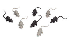 Halloween - Group of Toy Mice - Isolated on White Background Stock Image