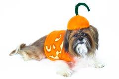 Halloween-Hündchen Lizenzfreies Stockbild
