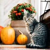 Halloween ha decorato l'entrata principale con le varie zucche di forma e di dimensione Il gatto su Front Porch ha decorato per i fotografia stock libera da diritti