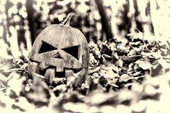 Halloween. halloween stock photos