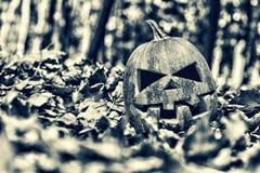 Halloween. halloween Royalty Free Stock Photo