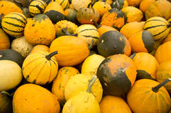 Halloween Harvest Stock Photography