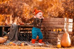 Halloween and harvest festival. A cheerful little boy in a gnome costume stands near a wooden box surrounded by agricultural decor.