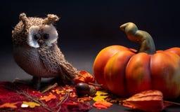 Halloween-Herbstdekoration mit Kürbis und netter Eule auf orange Farben der Blätter auf schwarzem Hintergrund lizenzfreie stockfotos