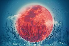 Halloween holiday background concept,Red full moon illuminated at night and horror eyes of jack pumpkin in the fog. Halloween holiday background concept,Red