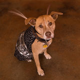 Halloween-Hond stock afbeeldingen