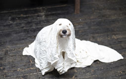 Halloween-hond stock foto's